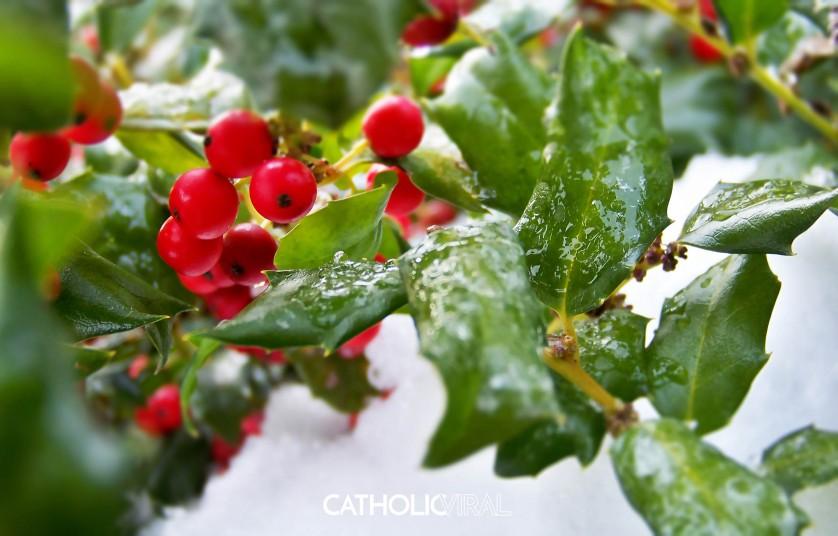 27 Christmas Season Celebration Photographs - HD Christmas Wallpapers - Holly Berries